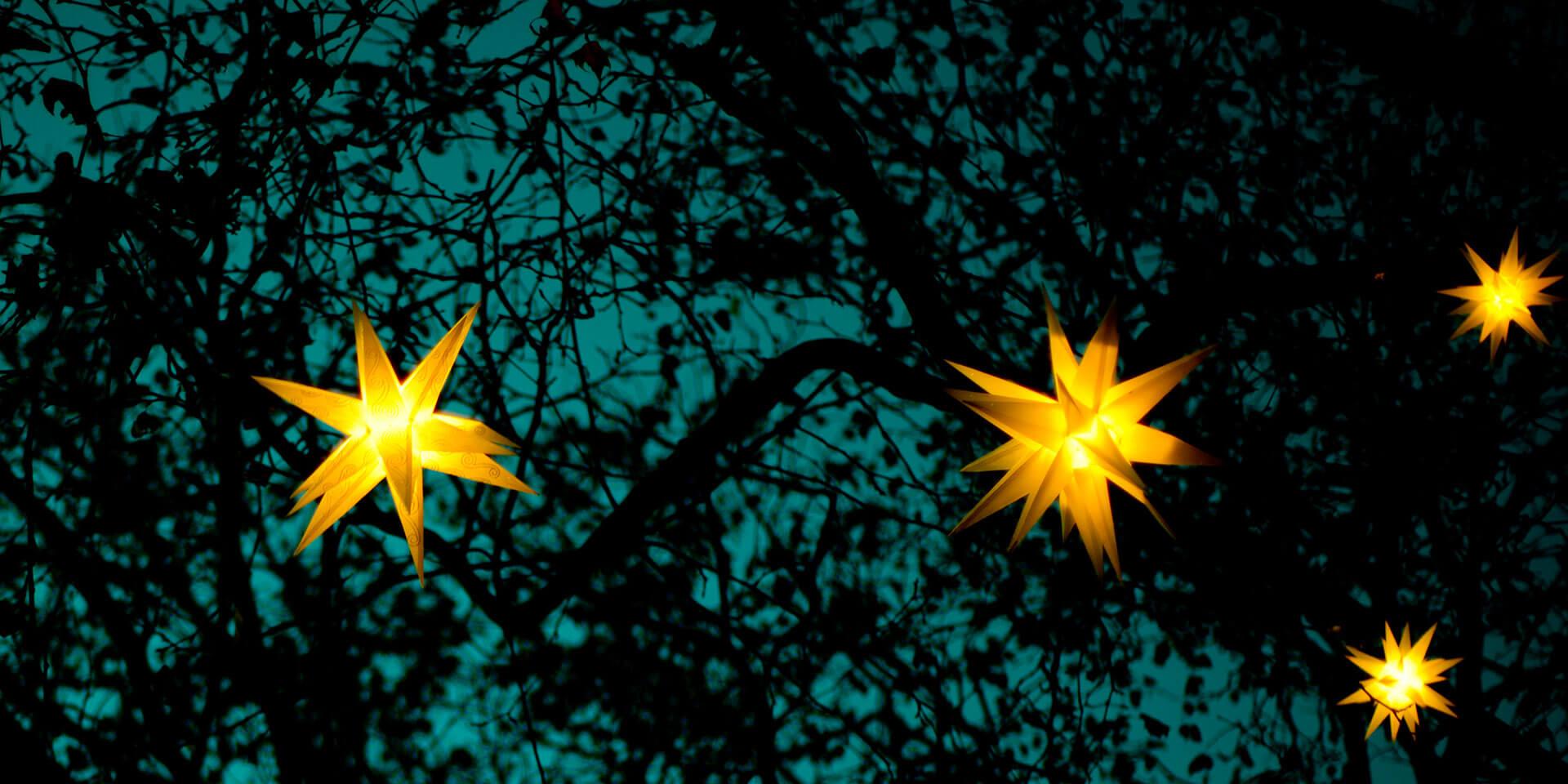 Sternleuchten in Baumkrone