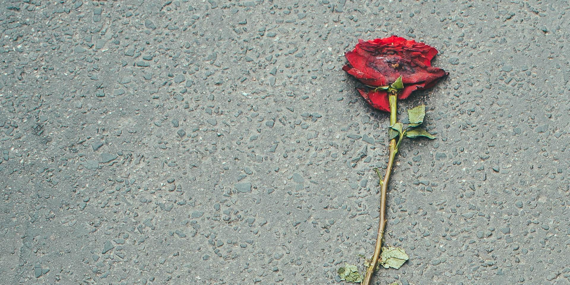 Zertretene Rose auf dem Asphalt